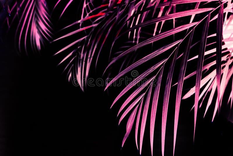 Bakbelyst svart för röd palmträd för sidor tropisk arkivfoto
