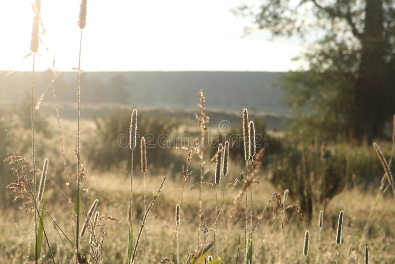 Bakbelysta gräs i den storslagna Tetonsen arkivbilder