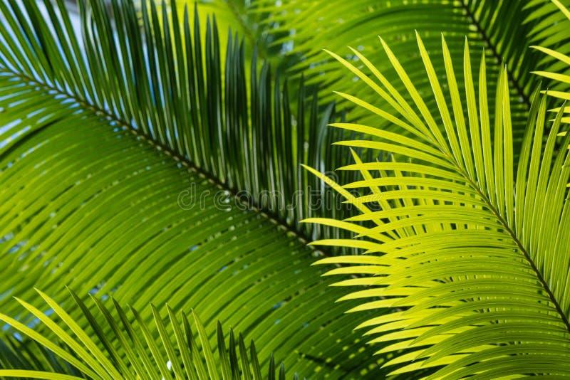 Bakbelysta palmträdsidor royaltyfri foto