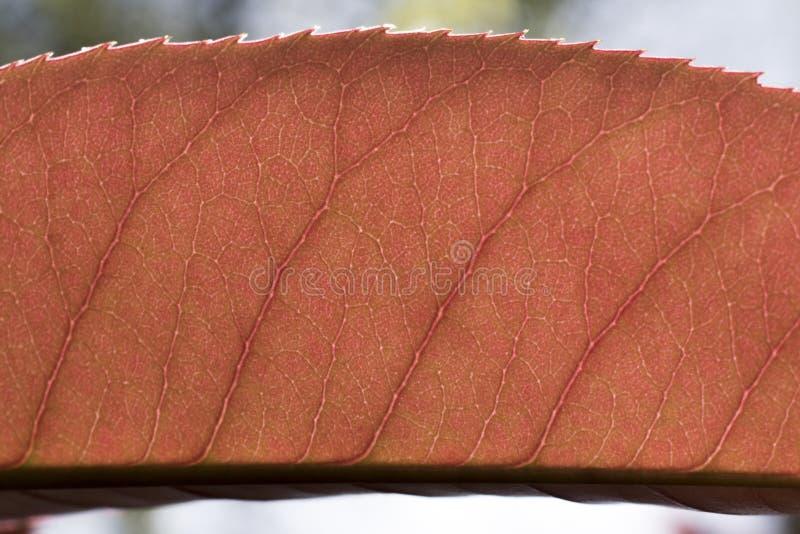 Bakbelysta trädtjänstledigheter arkivbild