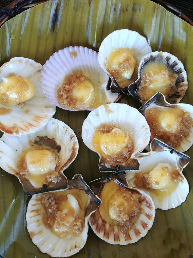 Baked Scallops royalty free stock images