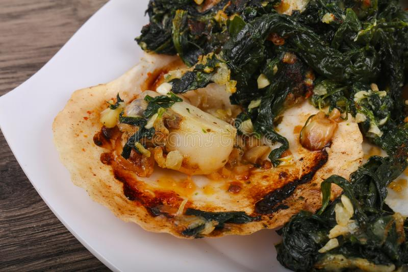 Baked scallops with spinach stock images