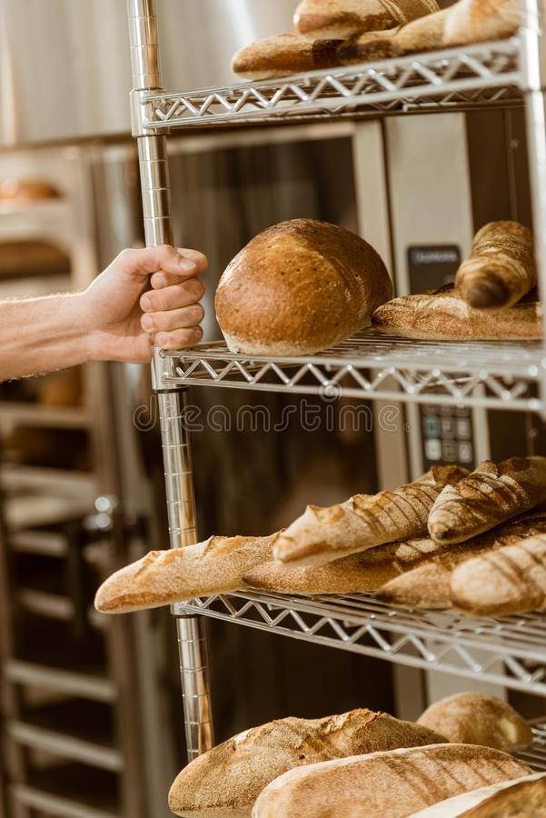 Baker holding shelves with fresh loaves of bread. On baking manufacture stock photo