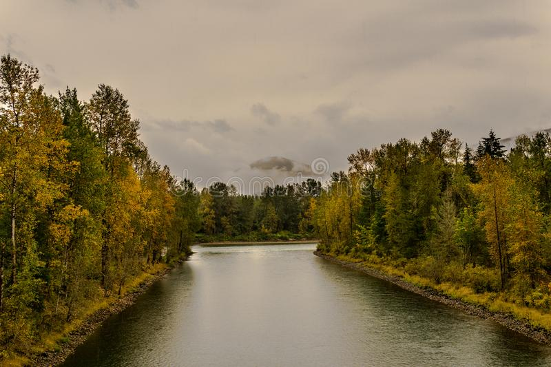 Baker river in a forest at autumn rainy day cloudy sky near Concrete Washington USA. Nature water grass green landscape tree fall outdoor park wood beautiful stock image