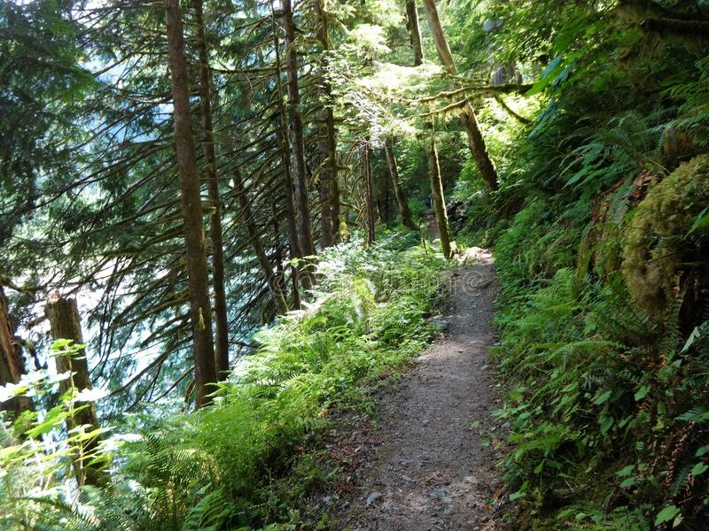 Baker River Trail in summer royalty free stock images