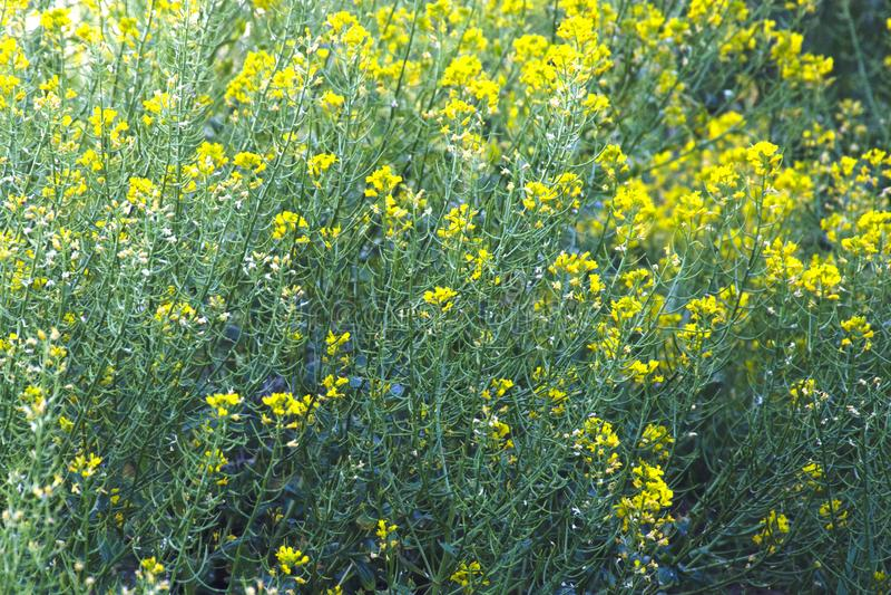 Bakgrund av änggräs och blommor royaltyfri fotografi