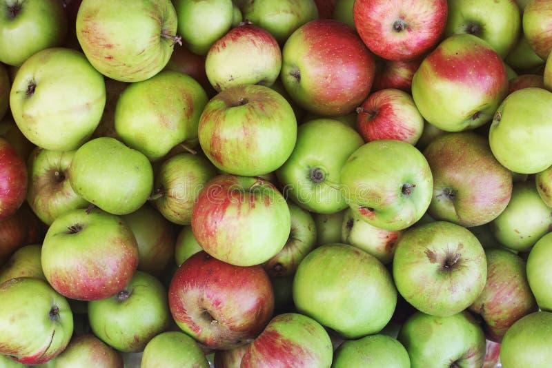 Bakgrund av äpplen Göra grön äpplen arkivbild