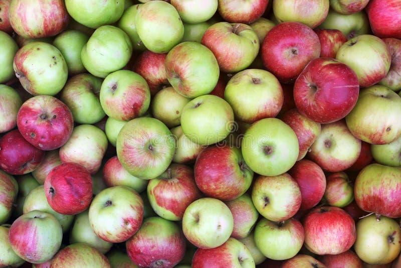 Bakgrund av äpplen Göra grön äpplen royaltyfri foto