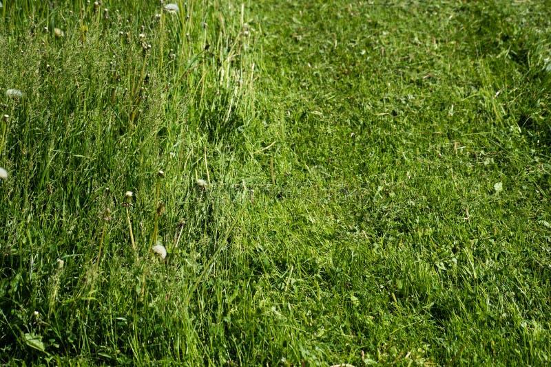 Bakgrund av att växa och att klippa grönt gräs arkivbild