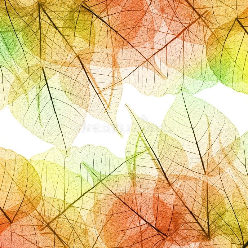 Bakgrund av Autumn Leaves - naturlig textur arkivbilder
