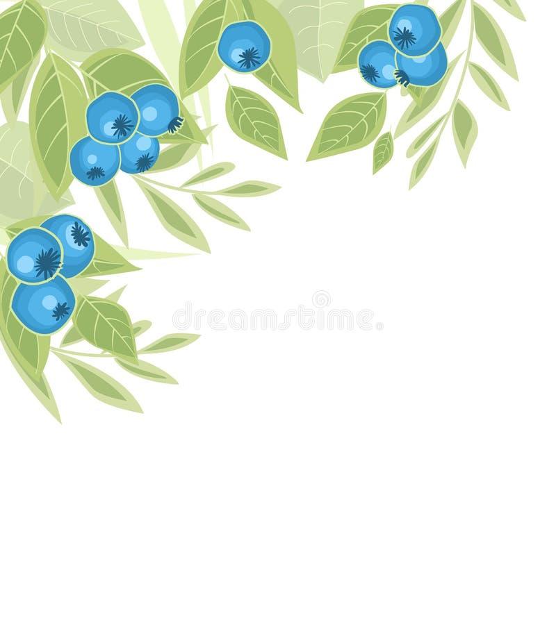 Bakgrund av blåbärfrukt stock illustrationer