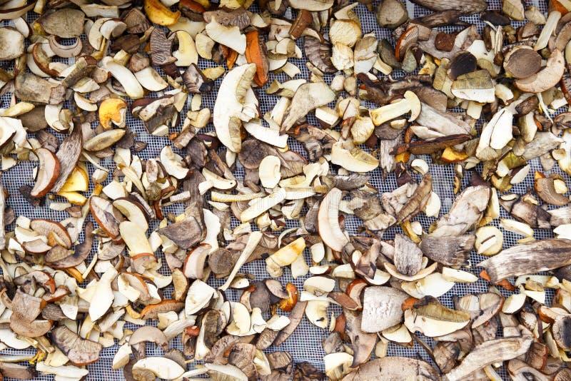 Bakgrund av blandade skivade skogchampinjoner arkivfoto