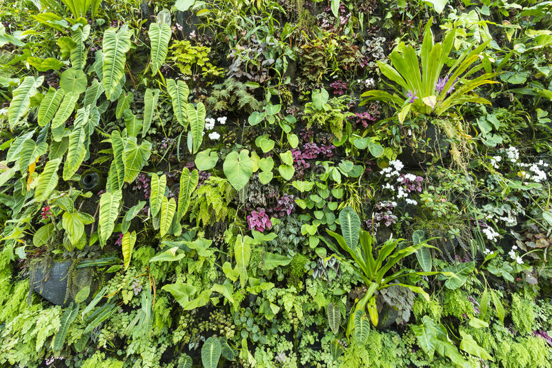 Bakgrund av botaniskt i natur arkivfoton