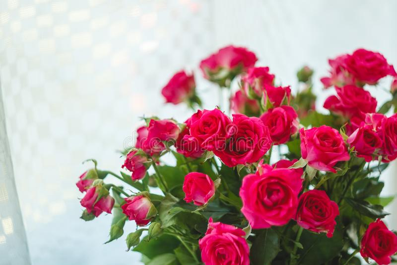 Bakgrund av de m?nga delikata lilla rosa rosorna royaltyfri foto