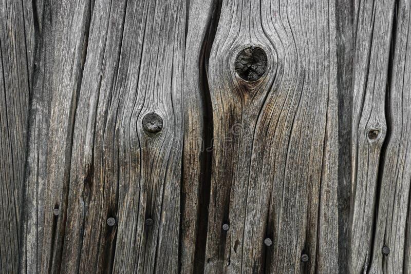 Bakgrund av den mycket gamla Wood brädeväggen med Rusty Nails fotografering för bildbyråer