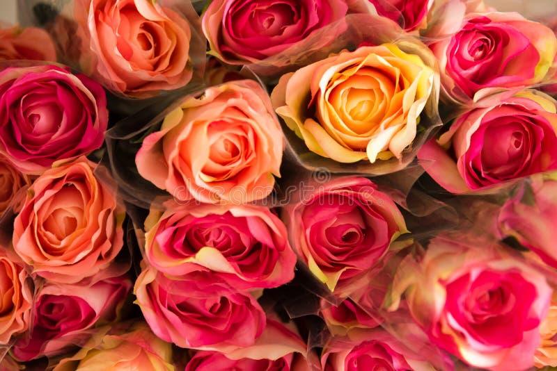 Bakgrund av den plast- blommacloseupen för blandade färgrika rosor royaltyfri bild