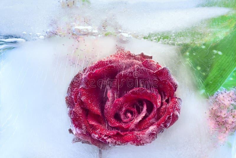 Bakgrund av den rosa blomman som frysas i is arkivbilder