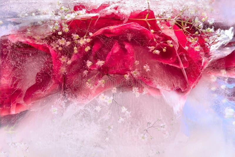 Bakgrund av den rosa blomman som frysas i is arkivfoton