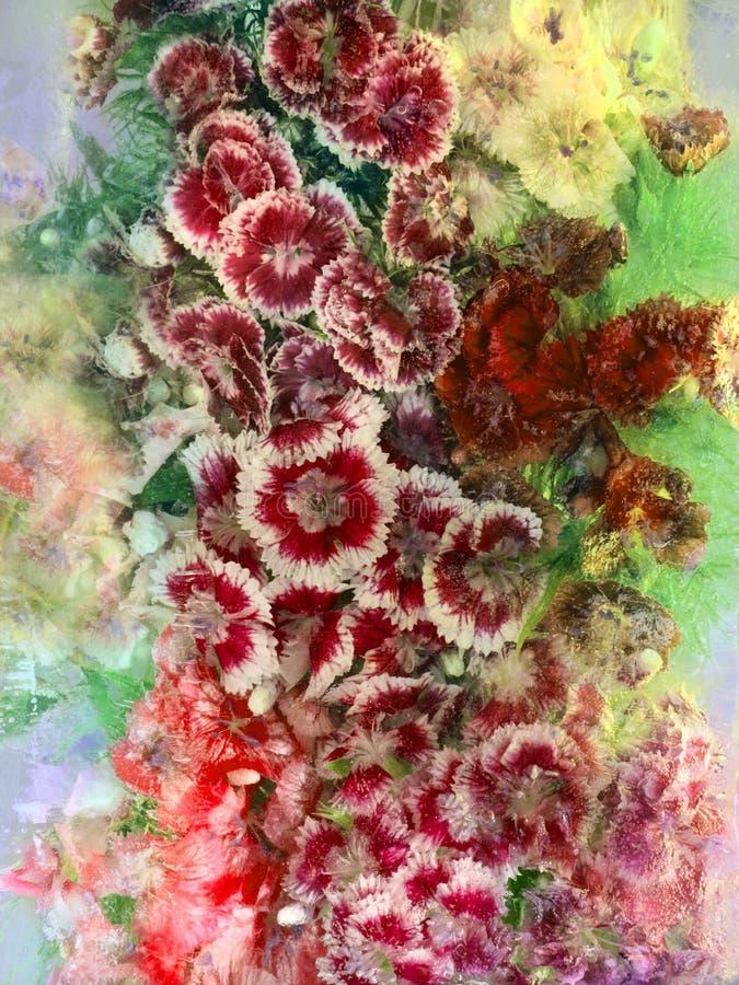 Bakgrund av den söta william blomman som frysas i is arkivbild