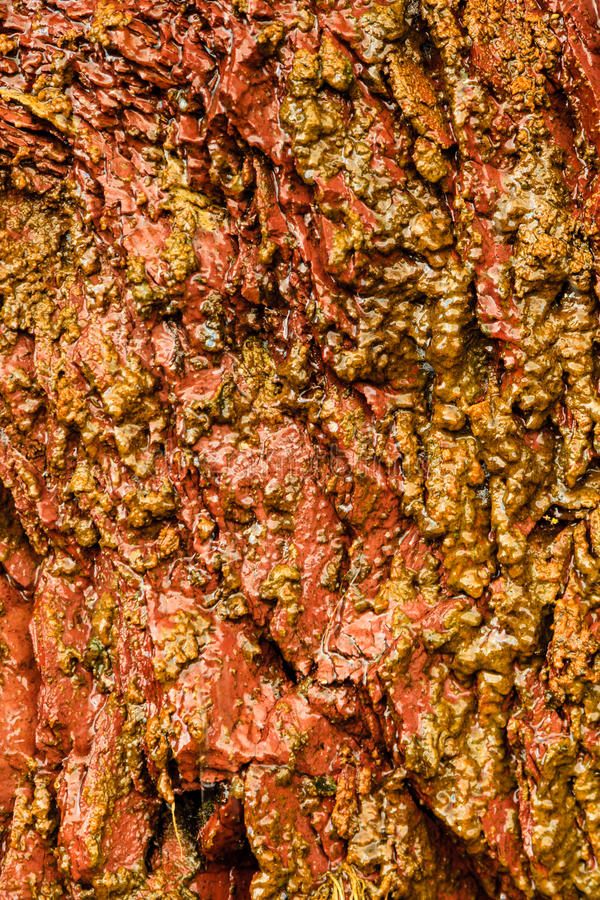 Bakgrund av den våta stenen för apelsinen vaggar utomhus- väggtextur arkivfoto