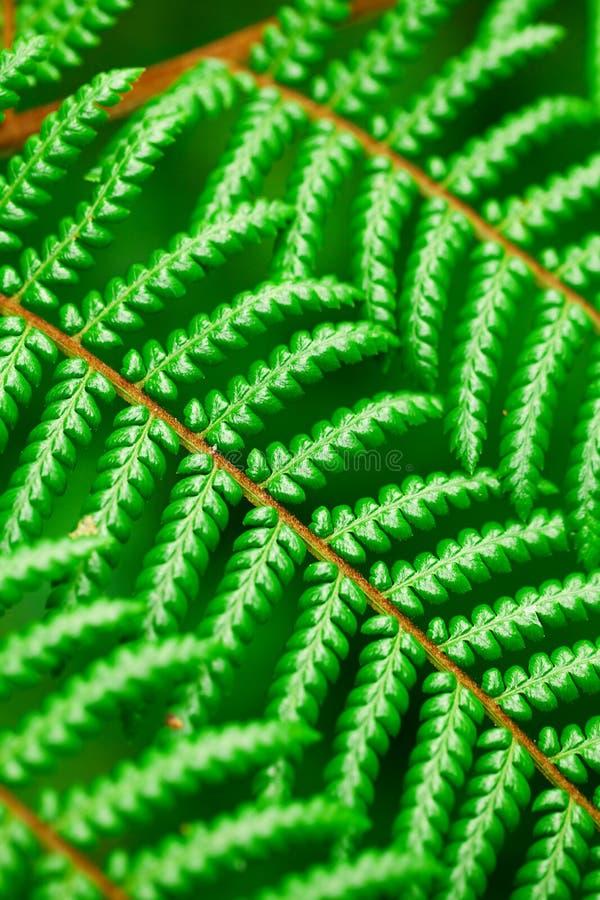Bakgrund av det gröna bladet royaltyfria bilder