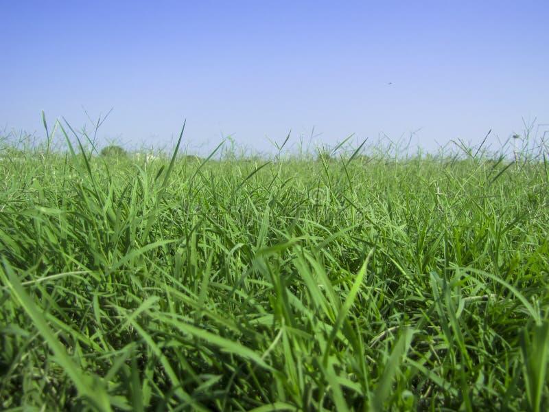 Bakgrund av frodigt gräs och blå himmel ett royaltyfria foton