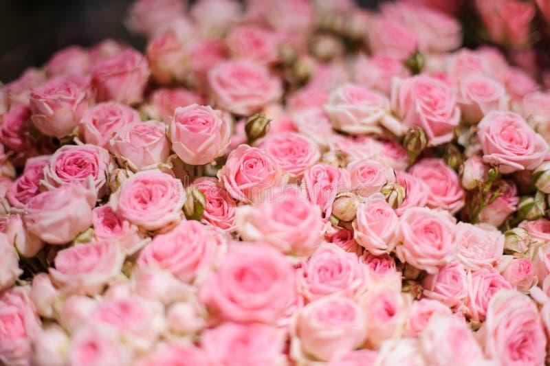 Bakgrund av lite härliga rosa rosor arkivbild