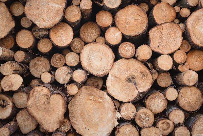 Bakgrund av pulpwoodtextur N?rbild stubbe Wood cirkel arkivfoton