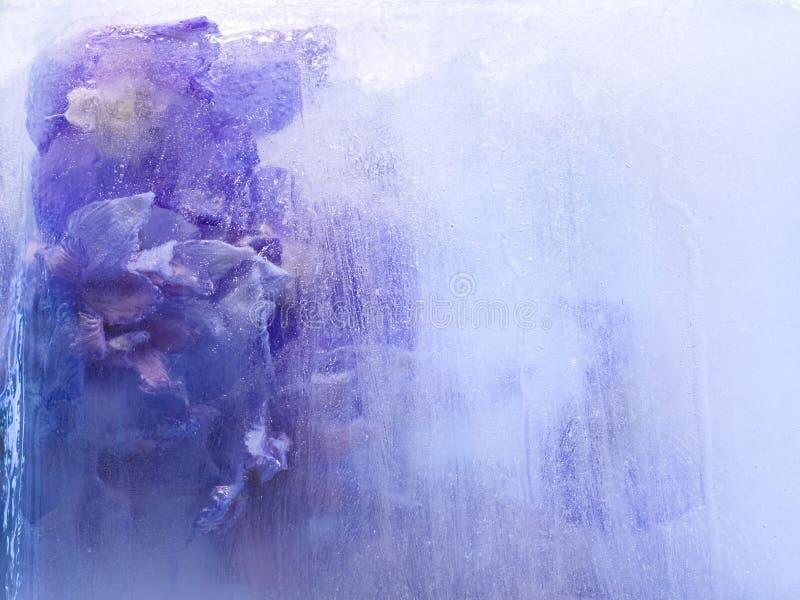 Bakgrund av   riddarsporreblomma som frysas i is royaltyfri foto