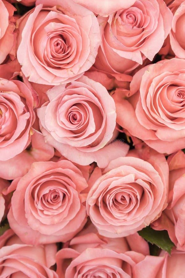 Bakgrund av rosa och persikarosor nya rosa ro En enorm bukett av blommor Den bästa gåvan för kvinnor Vertikalt foto arkivfoton
