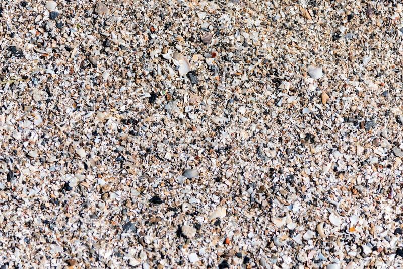 Bakgrund av sand och stycken av skal på stranden royaltyfria foton