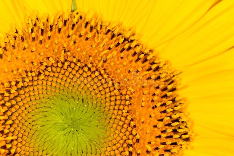 Download Bakgrund av solrosor close arkivfoto. Bild av natur - 106833966
