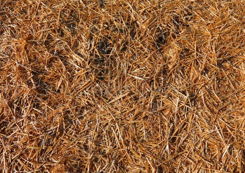Bakgrund av sugrör och torrt hö arkivfoto