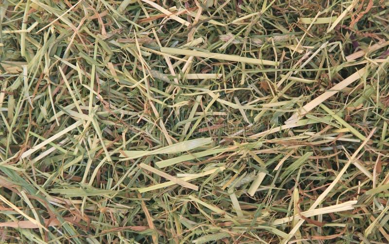 Bakgrund av torkat gräs arkivfoto