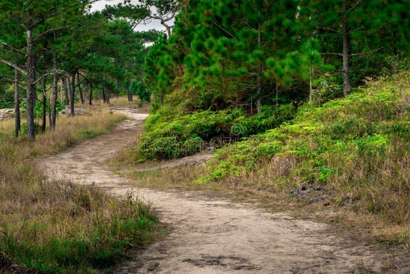 Bakgrund av vägen för sand för skogbanan sörjer trädet och grönt gräs royaltyfri foto