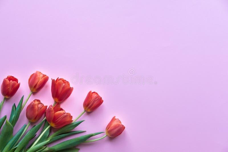 bakgrund blommar pink kopiera avst?nd Tulpan p? f?rgskrivbordet arkivbild