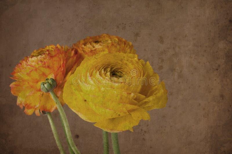 bakgrund blommar tappning arkivfoton