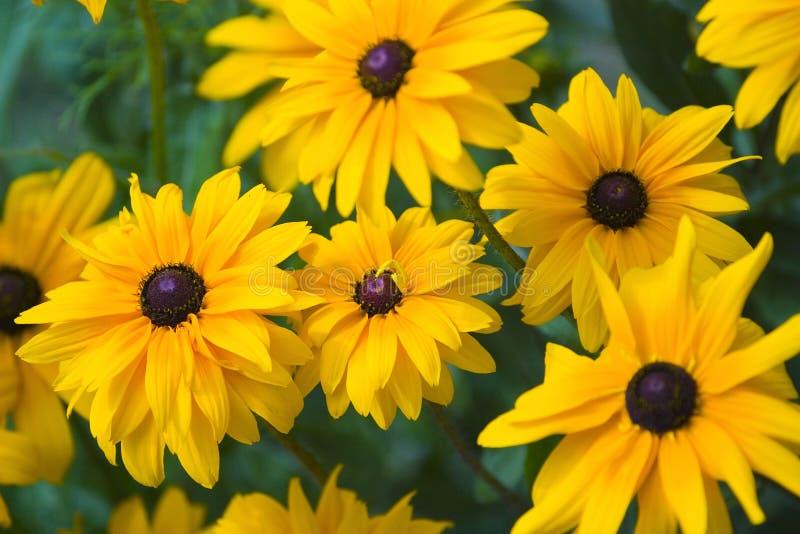 bakgrund blommar yellow royaltyfria foton