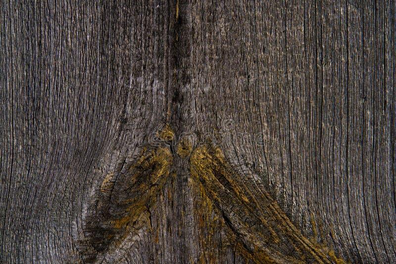 Bakgrund - den gamla yttersidan av ett träbräde Närbild Redan på yttersidan började att växa gul mossa arkivfoto