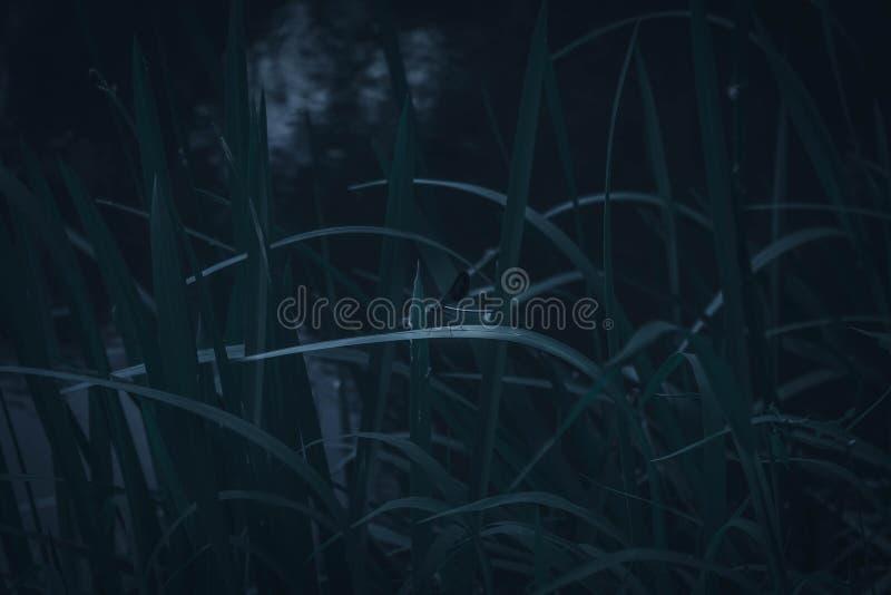 bakgrund för черная стрекозаsvartslända arkivfoton