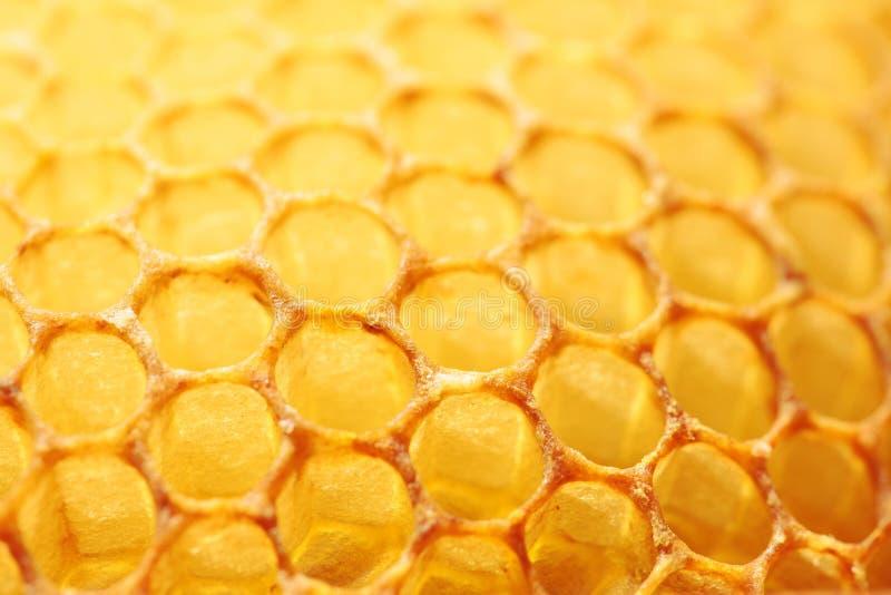 Bakgrund för abstrakt begrepp för honungskakacloseupguling arkivfoton
