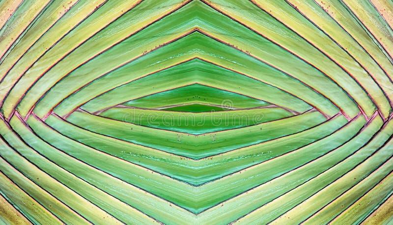 Bakgrund för abstrakt begrepp för textur för bananväxter arkivbild