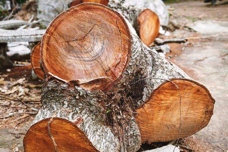 Bakgrund för abstrakt begrepp för textur för trädstubbe med apelsinbruntfärg n arkivfoton