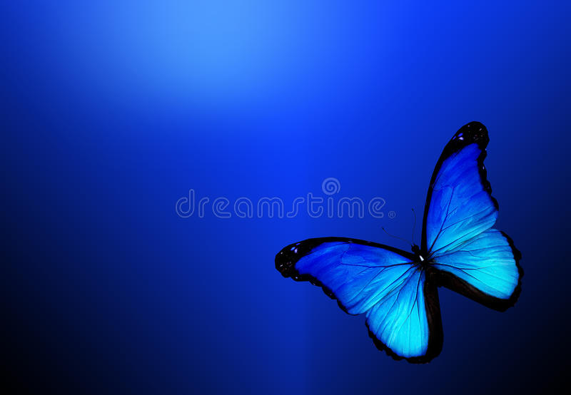 Bakgrund för blåttfjärilsonblue arkivfoto