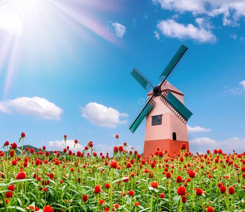 Bakgrund för blomma och för väderkvarn och för blå himmel för jordklotamaranth arkivfoton