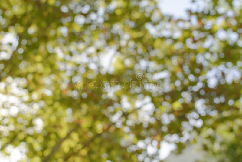 Bakgrund för bokeh för träd för skoggräsplan abstrakt ljus naturlig royaltyfria bilder
