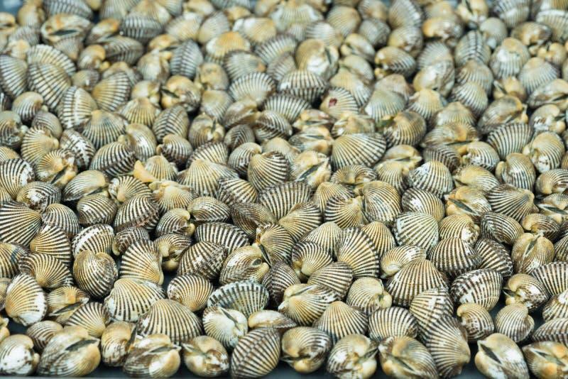 Bakgrund för bubblor för blod för backgrouShells för skalblodbubblor Ny havsfoodnd nytt hav för mat royaltyfri foto