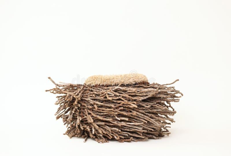 Bakgrund för Digitalt fotografi av träOwl Nest Prop arkivbilder