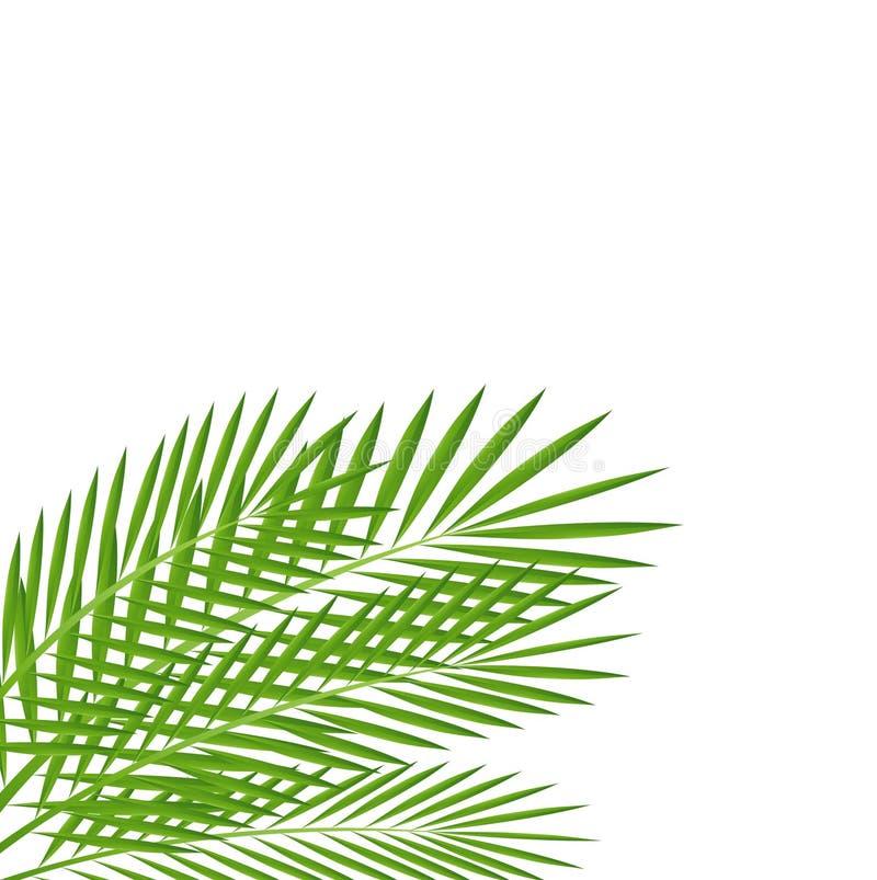 Download Bakgrund För En Design Med Gröna Filialer Vektor Illustrationer - Illustration av klassiskt, fantasi: 37348868