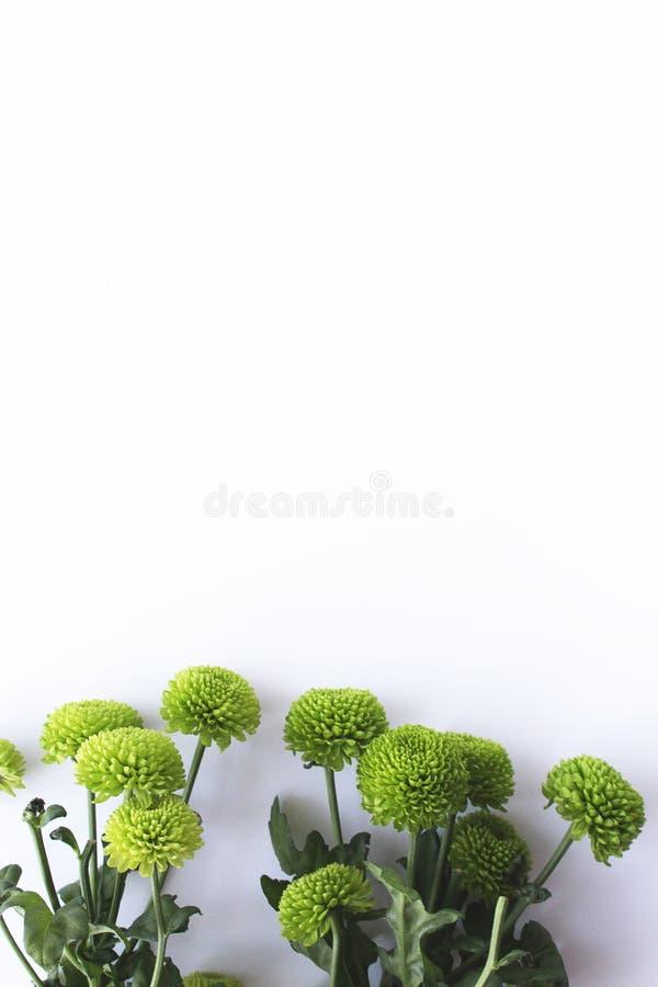 Bakgrund för grönska för gröna växter för vår vit royaltyfri foto